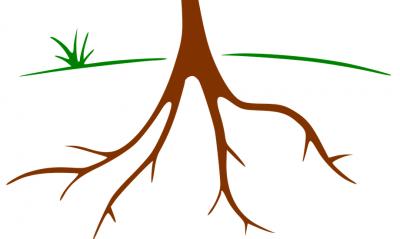 Radici di un albero, basi della crescita